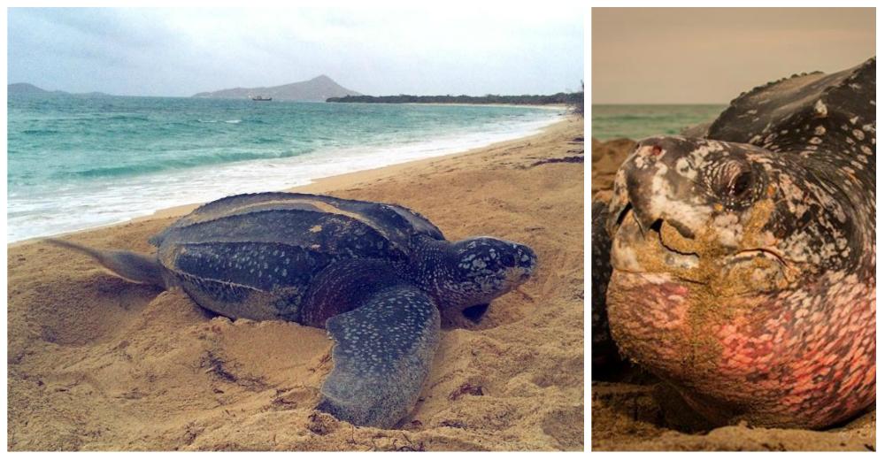 Boca-tortuga-marina-portada