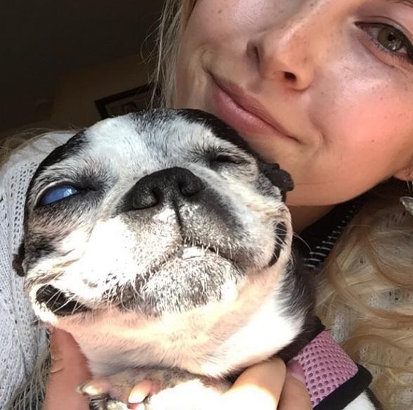 Boston-terrier-ciego 1