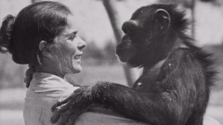 Chimpance-laboratorio-reencuentro 2