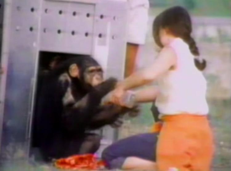 Chimpance-laboratorio-reencuentro 3