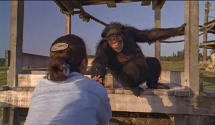 Chimpance-laboratorio-reencuentro 6