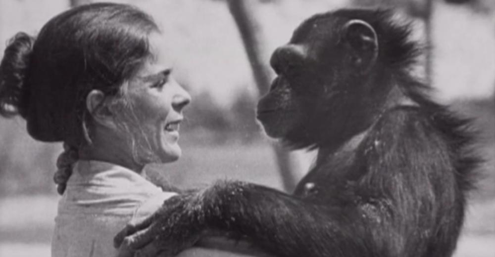 Chimpance-laboratorio-reencuentro-portada