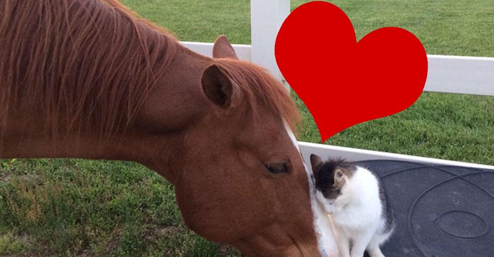 Gato-caballo-amigos-portada