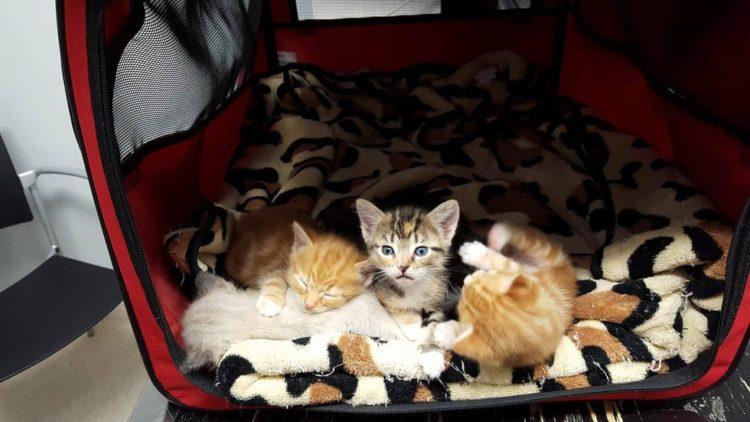 Gato paralizado 1