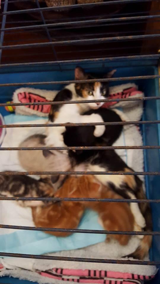 Gato paralizado 2