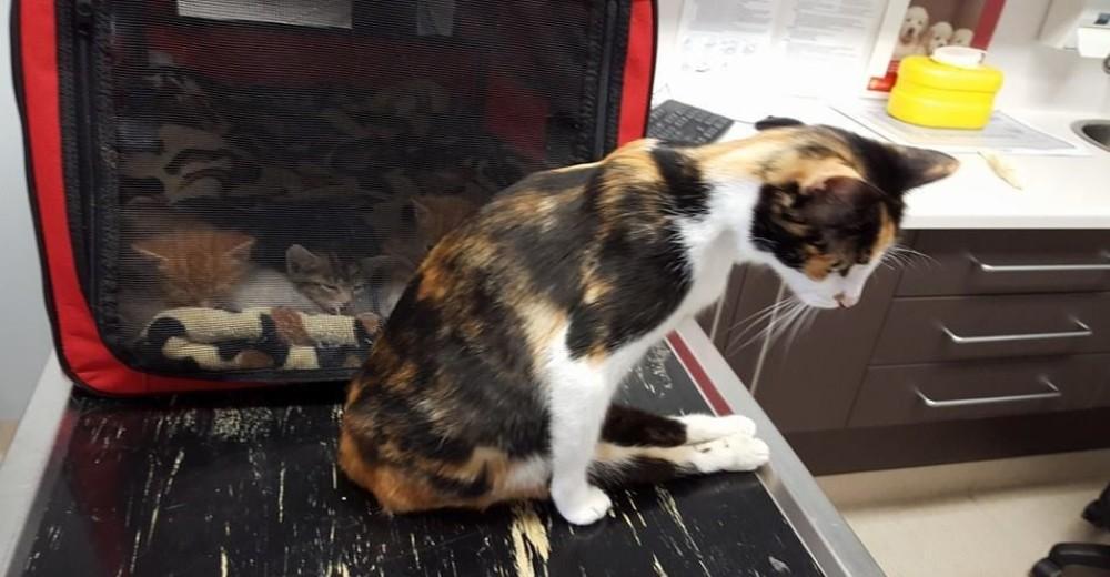 Gato paralizado 3