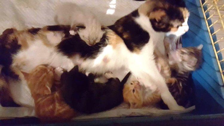 Gato paralizado 4