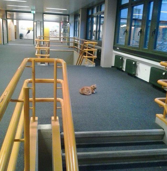 Gato-universidad-augsburg-alemania-10