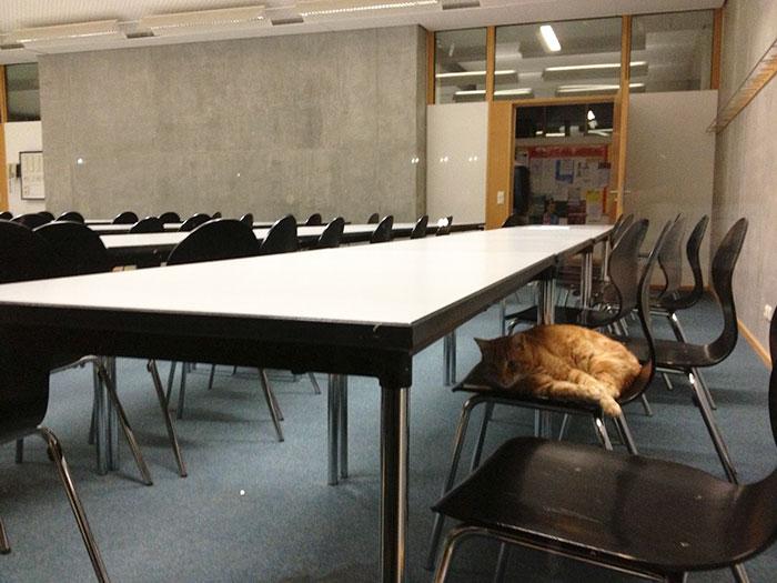 Gato-universidad-augsburg-alemania-11