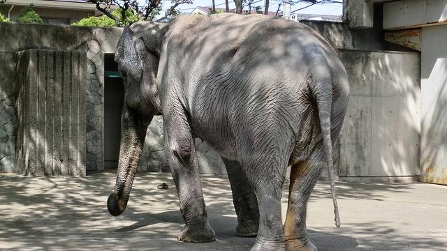 Hanako-elefante-murio 5