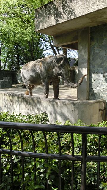 Hanako-elefante-murio 7