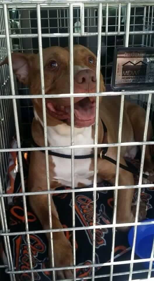 Jugador-futbol-rescata-perro 2