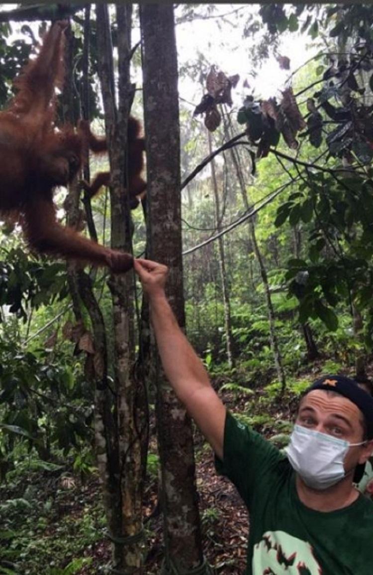Leonardo DiCaprio Santuario Indonesia 5