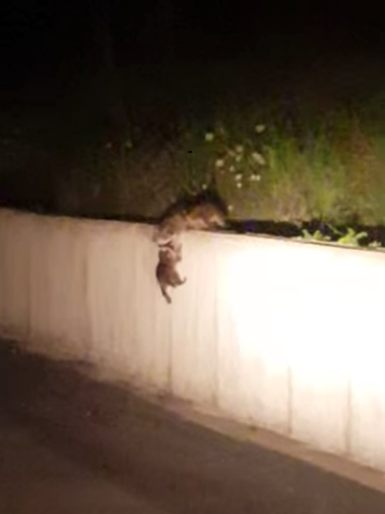 Madre-mapache-inteligente 5