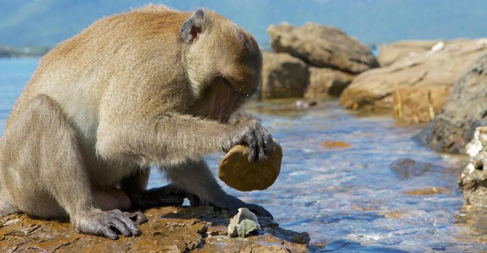 Monos-stone-age-portada