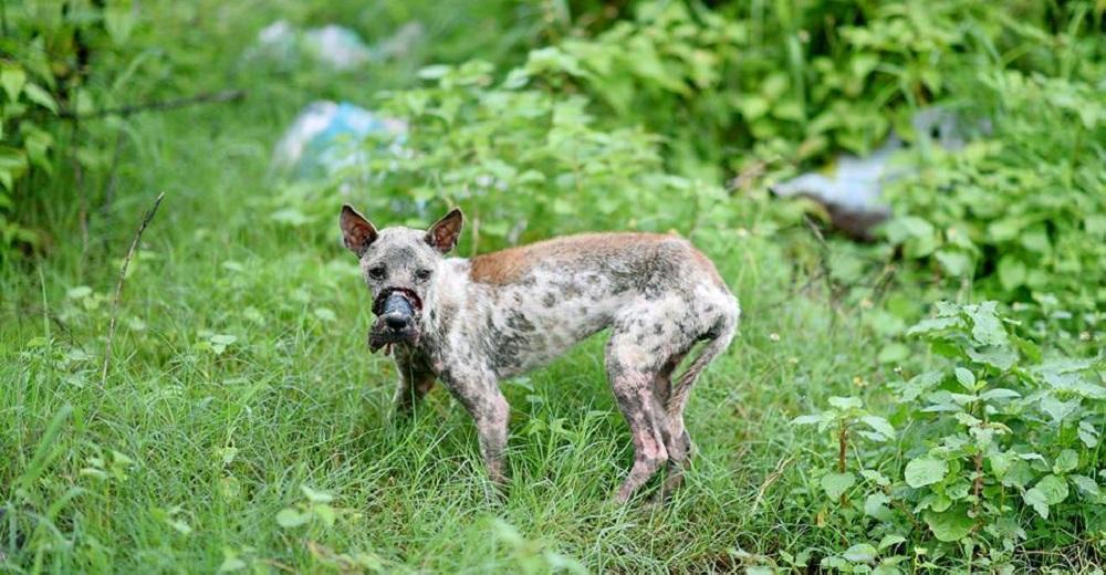 PORTADA perro Lucky escapa hocico atado necrosis