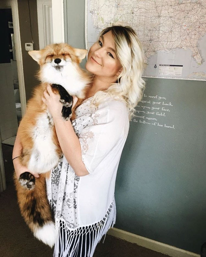 Perrito Fox 12