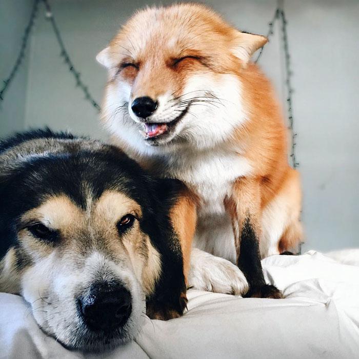 Perrito Fox 5