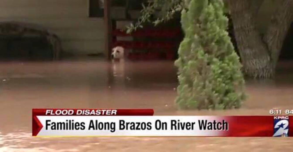 Perro-rescatado-inundacion-portada