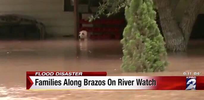 Perro-rescatado-inundacion