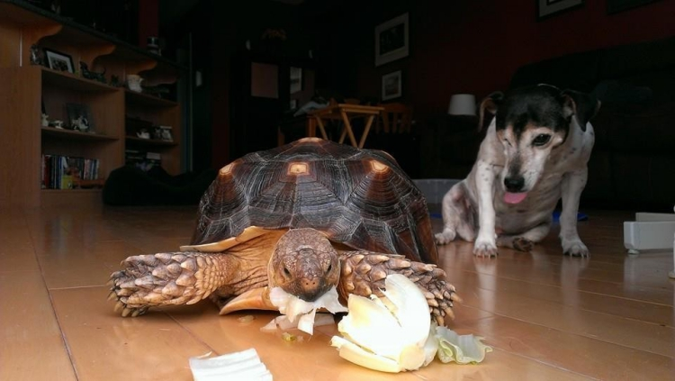 Perro-sin-ojo-tortuga 12