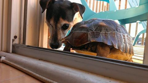 Perro-sin-ojo-tortuga 13