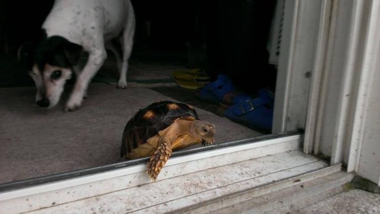 Perro-sin-ojo-tortuga 15