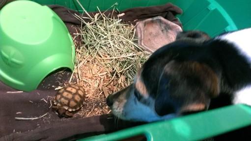 Perro-sin-ojo-tortuga 5