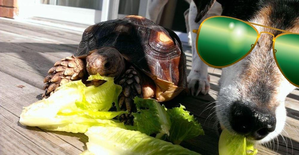 Perro-sin-ojo-tortuga-portada