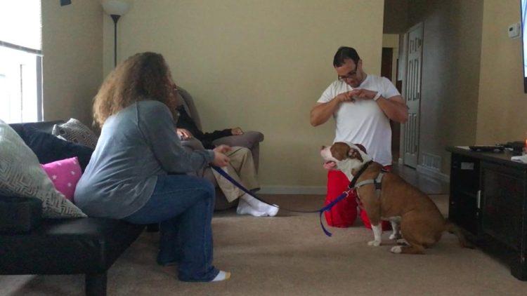 Pitbull-adoptado-familia-sordos 5