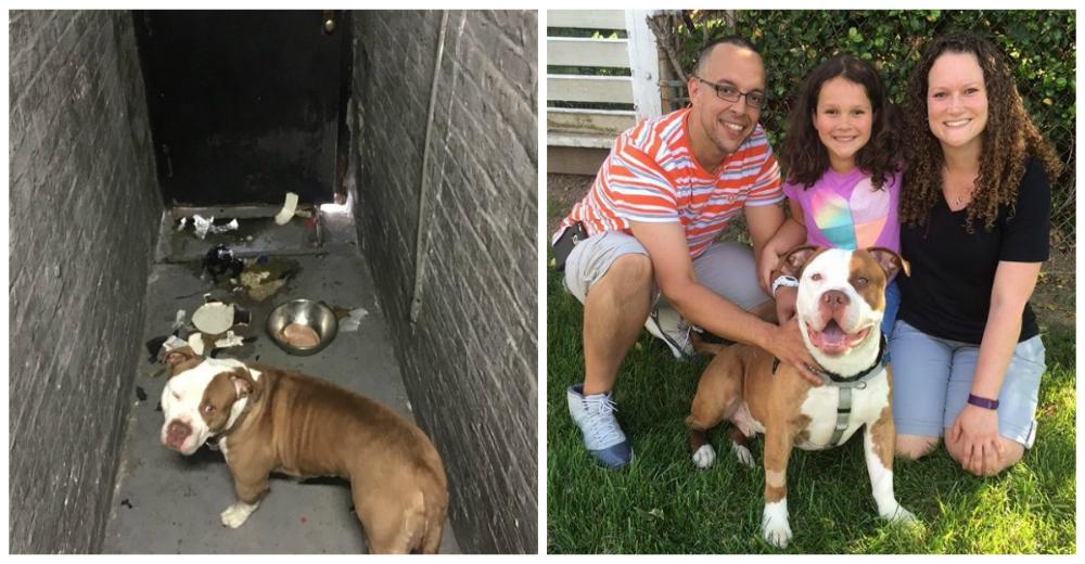 Pitbull-adoptado-familia-sordos-portada