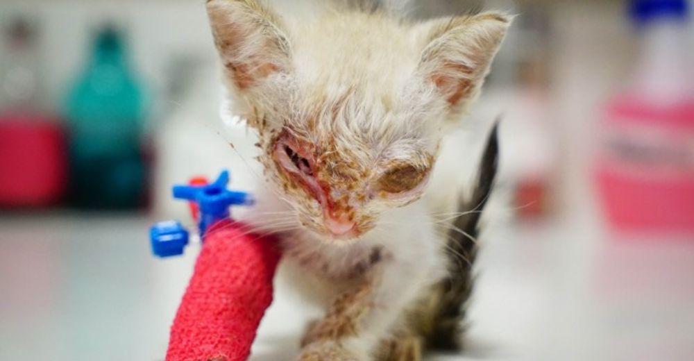 Price-ayuda-gatito-portada