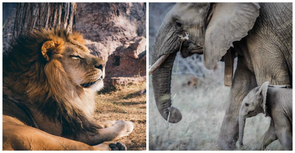 Proyecto-reinsercion-animales-Europa-portada