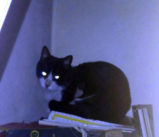 Rescate-gatito-arbol 10