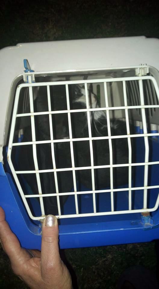 Rescate-gatito-arbol 7