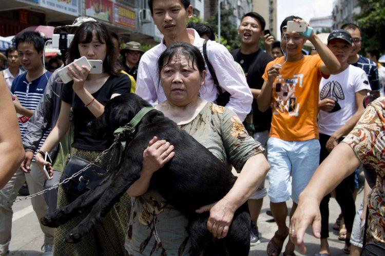 Rescate-perros-festival-china 12