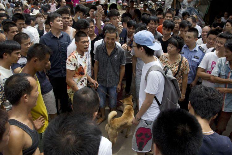 Rescate-perros-festival-china 13