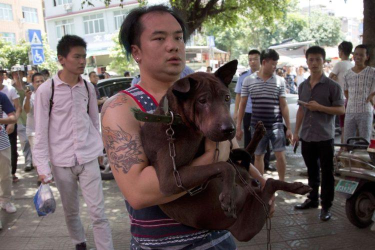 Rescate-perros-festival-china 14