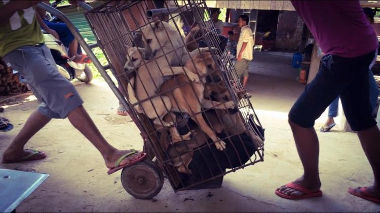 Rescate-perros-festival-china 3