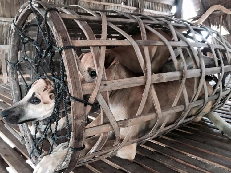 Rescate-perros-festival-china 5
