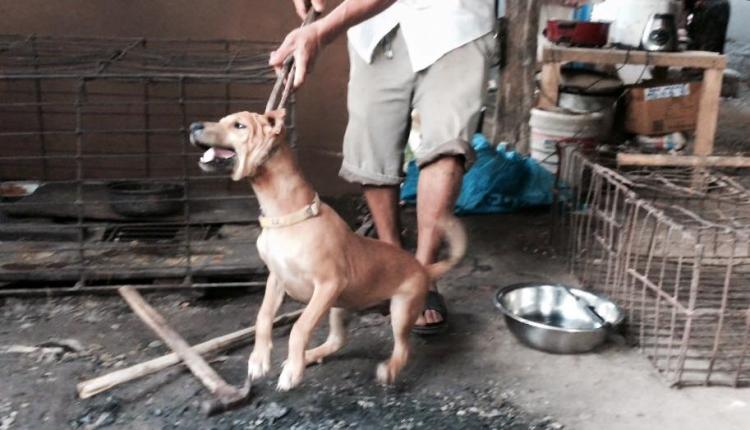Rescate-perros-festival-china 8