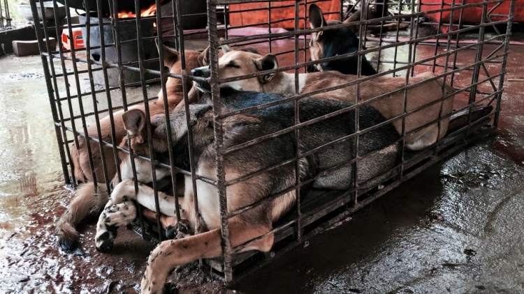 Rescate-perros-festival-china 9