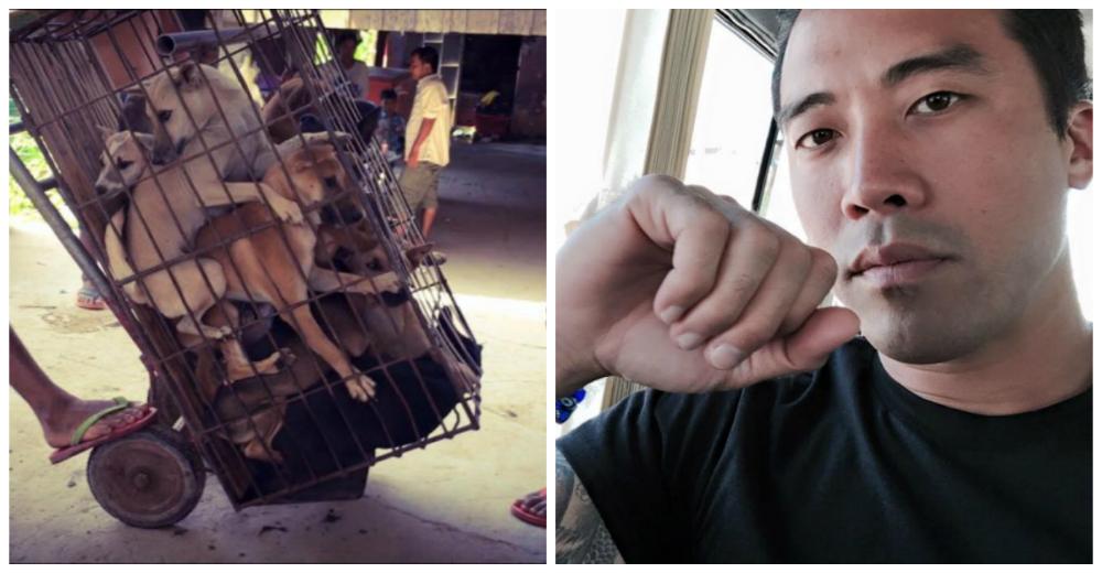 Rescate-perros-festival-china-portada