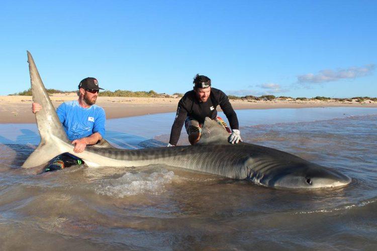 Selfie-tiburon-Australia 1