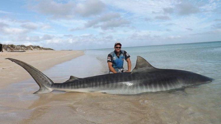 Selfie-tiburon-Australia 5