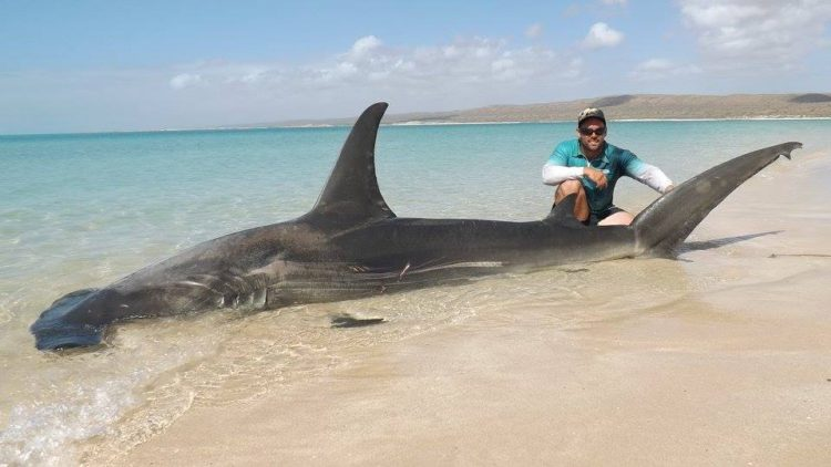 Selfie-tiburon-Australia 6
