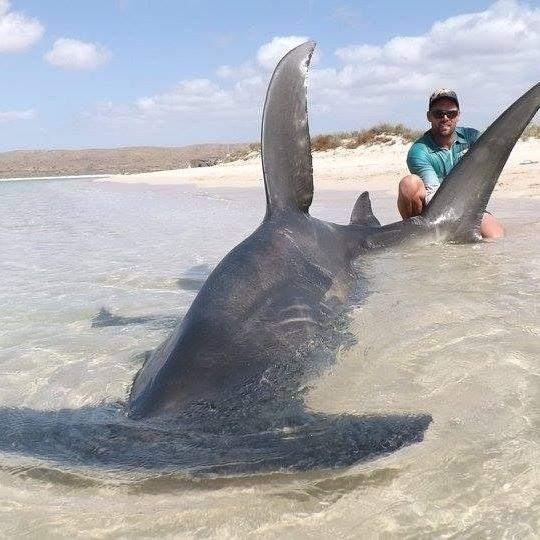 Selfie-tiburon-Australia 7