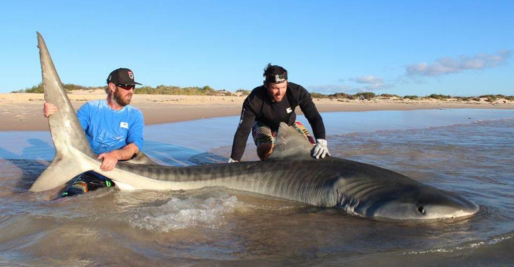 Selfie-tiburon-Australia-portada