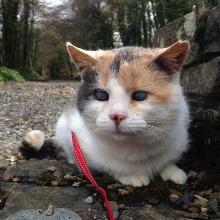Stevie-gato-ciego-Irelands 0
