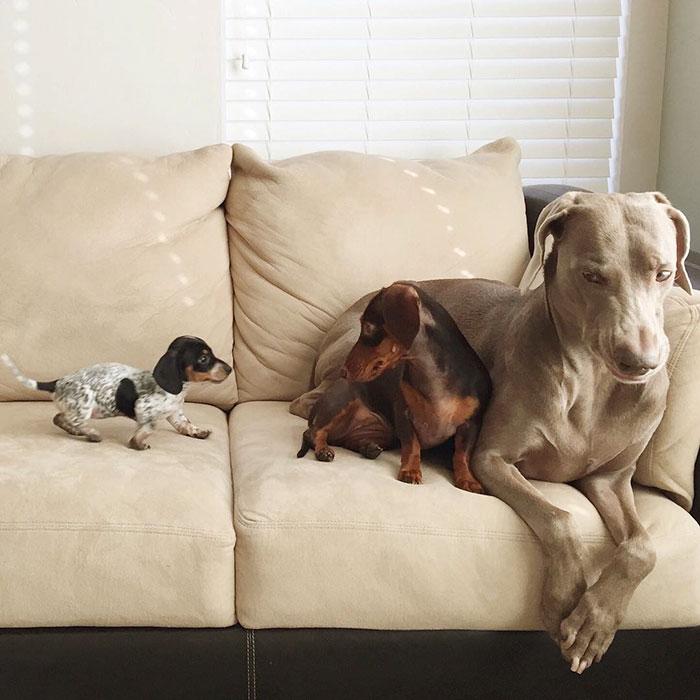 Tres-perros-amigos 01